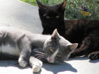Cooper House Cats