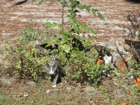 Cooper House Cats in Bush
